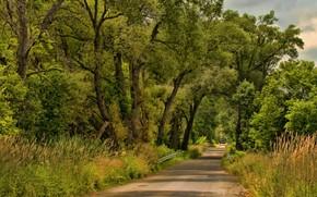 Картинка дорога, лес, деревья