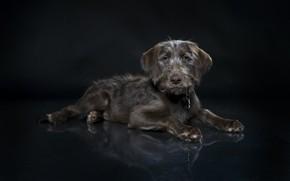 Картинка собака, фон, друг