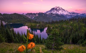 Обои лес, лето, небо, трава, облака, цветы, горы, озеро, отражение, скалы, холмы, склоны, вершины, лилии, высота, ...