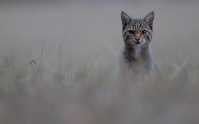 Картинка кот, cat, Cédric Join