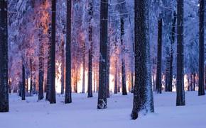 Картинка лес, снег, Германия, Тюрингия