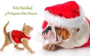 Картинка новый год, собака, котёнок