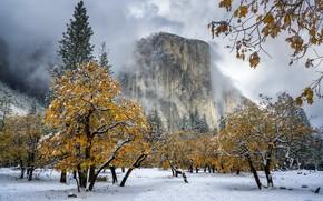 Картинка Snow, Black Oak Soaked, El Capitan Meadow