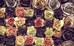 Картинка цветы, розы, бутоны, много, roses, Bouquet