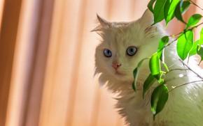 Картинка кошка, кот, взгляд, листья, ветки, фон, портрет, белая, голубоглазая