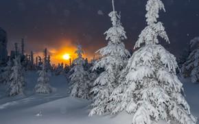 Картинка зима, снег, деревья, пейзаж, закат, природа, Германия, ели, Бавария