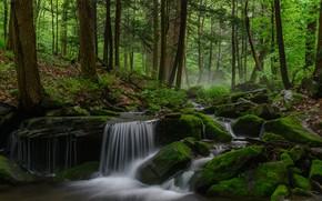 Картинка лес, деревья, река, мох