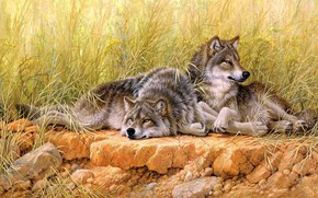 Картинка поле, трава, взгляд, природа, поза, камни, отдых, рисунок, картина, луг, арт, пара, волки, живопись, два, …