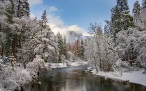 Картинка зима, лес, снег, пейзаж, природа, река, красота