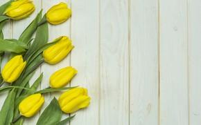 Картинка цветы, букет, желтые, тюльпаны, fresh, yellow, wood, flowers, beautiful, tulips, spring, tender