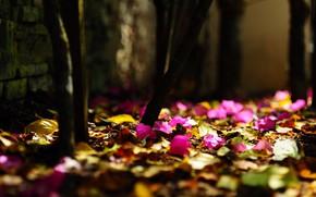 Картинка опавшие листья, розовые цветочки, размытость боке