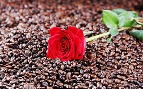 Картинка фото, роза, кофе