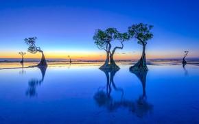 Картинка небо, звезды, деревья, синий, отражение, синева, цвет, горизонт, сумерки, водоем, симметрия