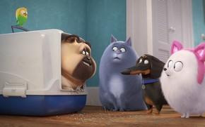 Картинка кошка, животные, собаки, кролик, попугай, переноска, Тайная жизнь домашних животных 2, The Secret Life of …