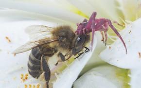 Картинка цветок, пчела, паук