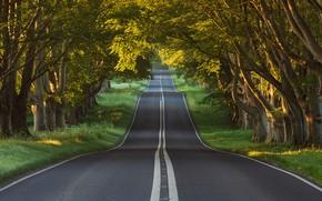 Картинка дорога, лес, деревья, Англия, Dorset, Blandford Forum