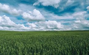 Картинка Природа, Облака, Поле, Трава, Nature, Clouds, Grass, Green, Field, Farm, Урожай, Crop, Growth, Cropland, Jahoo ...