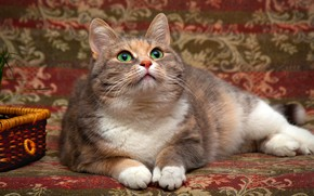 Картинка кошка, трава, глаза, кот, взгляд, фон, покрывало, мордочка, зеленые, лежит, корзинка, гобелен, смотрит вверх, пятнистая, ...