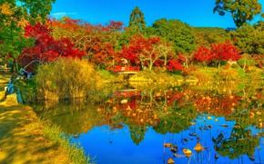 Картинка фото, HDR, Природа, Осень, Деревья, Япония, Пруд, Парк, Киото, Daikaku-ji