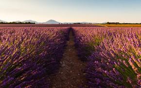 Картинка поле, лето, небо, свет, цветы, горы, природа, холмы, Франция, тропинка, много, лаванда, сиреневые, плантация, Прованс, …