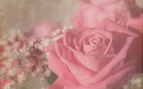 Картинка розы, букет, текстура