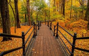 Картинка осень, деревья, парк, лестница