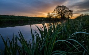 Картинка трава, закат, дерево, берег, водоем
