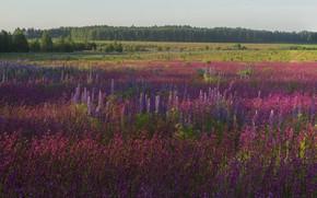 Картинка лес, лето, цветы, луг