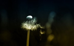Картинка трава, природа, одуванчик