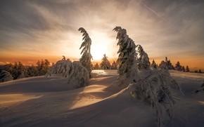 Картинка зима, лес, небо, солнце, облака, свет, снег, закат, ветки, природа, рассвет, в снегу, вид, ели, …