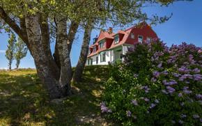 Картинка деревья, маяк, берёзы, сирень, Point Betsie Lighthouse, Штат Мичиган, Frankfort, Michigan State