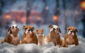 Обои зима, кошка, собаки, взгляд, снег, деревья, город, огни, поза, уют, котенок, настроение, транспорт, улица, красота, ...