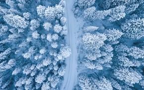 Картинка зима, дорога, лес, снег, деревья, в снегу, ели, вид сверху, ёлочки, заснеженный, вид с высоты