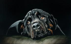 Картинка пес, лежит, by shonechacko
