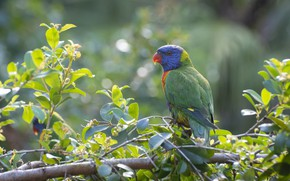 Картинка природа, попугай, Fleur Walton