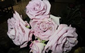 Картинка цветы, розы, 2018, сиреневые розы, Meduzanol ©