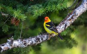Картинка природа, птица, ветка, окрас
