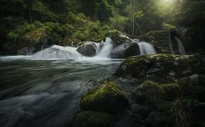 Картинка лес, река, камни, мох, Италия, водопады, каскад