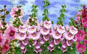 Картинка grafika, kwiaty, malwy