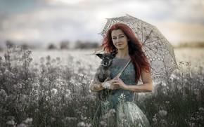 Картинка собака, зонт, дама
