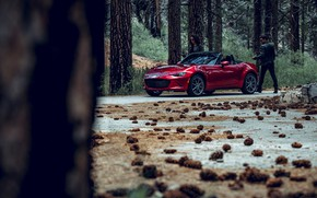Картинка лес, транспорт, автомобиль, шишки, MAZDA MX5 Miata