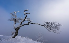 Картинка снег, природа, туман, дерево