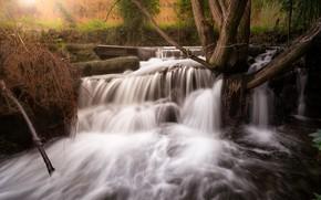 Картинка лес, деревья, ветки, стволы, водопад, поток, каскад