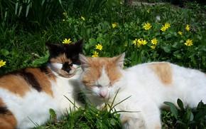 Картинка кошка, кот, цветы, коты, весна, Mamala ©