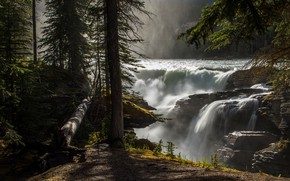 Картинка лес, свет, деревья, ветки, туман, камни, скалы, стволы, берег, водопад, ели, пар, бревно, хвоя, в …