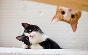 Обои кошки, коты, рыжий, котята, котёнок, черно - белый