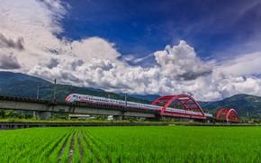 Картинка поле, мост, поезд