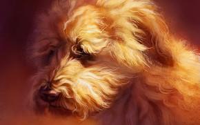 Картинка собака, пшеничный терьер, by Pixxus