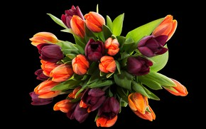 Картинка цветы, букет, фиолетовые, тюльпаны, черный фон, оранжевые