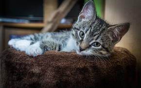 Картинка взгляд, котенок, мордочка
